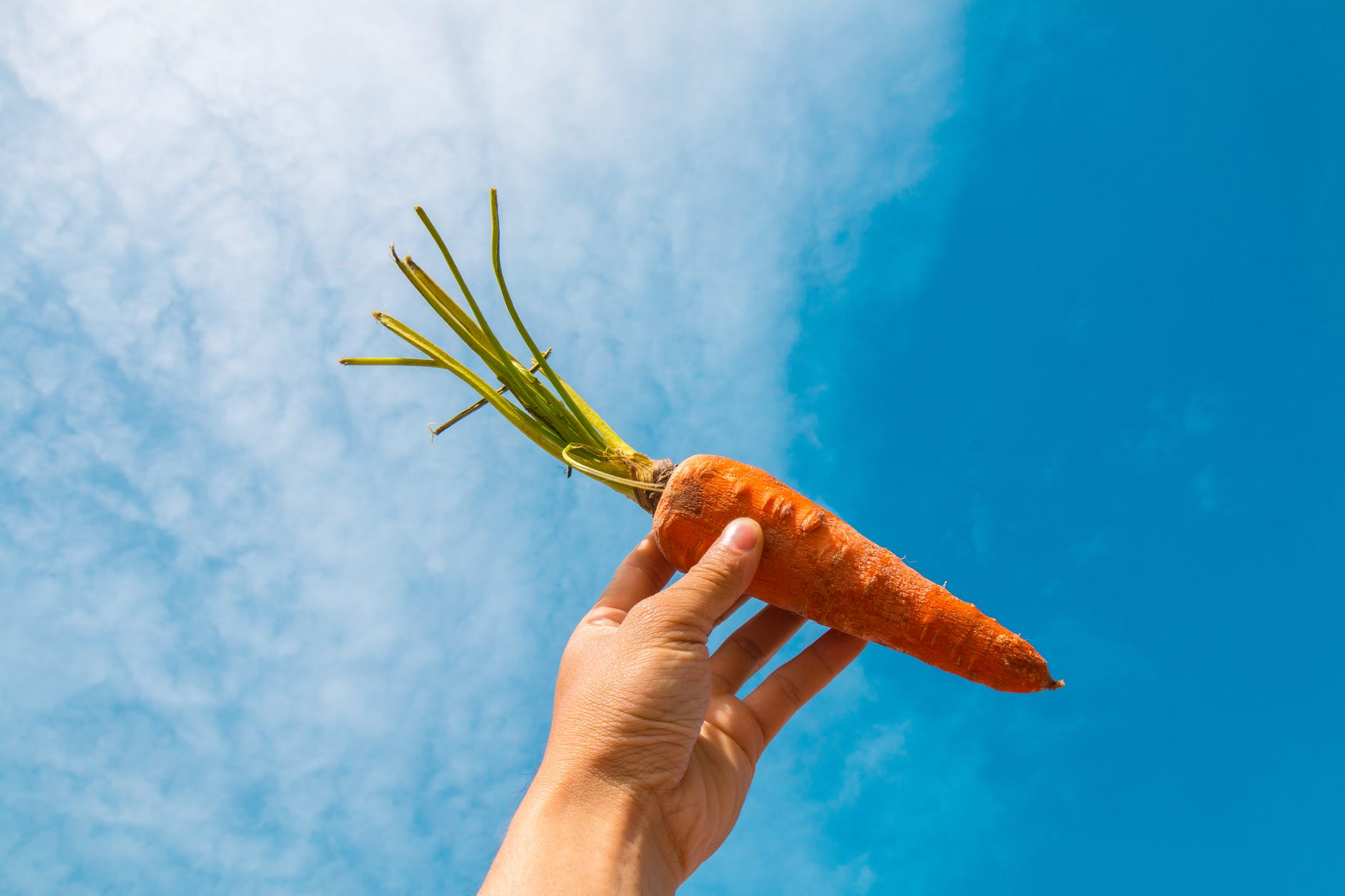 hand holding a carrot up against a blue sky