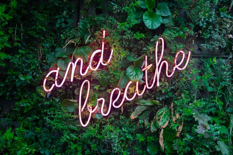 pink neon sign on green foliage saying and breathe